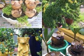 Năm con Chuột chơi cây cảnh Tết với tạo hình chuột