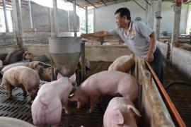 Giá lợn hơi lại tiếp tục tăng phi mã, vượt mốc 90.000 đồng/kg