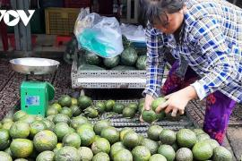 Nắng nóng, giá nhiều loại trái cây tăng cao
