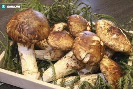 Tới mùa ăn chay, giới nhà giàu săn tìm loại nấm có giá hàng chục triệu đồng 1kg