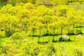 Rừng mùa thu Na-uy trong lòng xứ Thanh