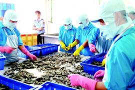 """Nỗ lực khắc phục """"thẻ vàng"""" IUU để thủy sản lại rộng cửa vào EU"""