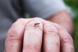 Đà Nẵng cảnh báo dịch sốt xuất huyết đang tăng mạnh