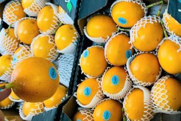 Sính ngoại, nhà giàu đổ xô mua chanh leo vàng giá 800.000 đồng/kg