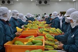 Xuất khẩu rau quả đạt 2,5 tỷ USD