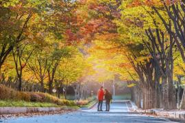 3 lý do khiến bạn nhất định phải xách balo lên và đi trong mùa thu này