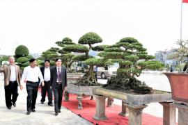 Suối Tiên đăng cai tổ chức Lễ hội Bonsai & Suiseki Châu Á - Thái Binh Dương lần thứ 15 - 2019